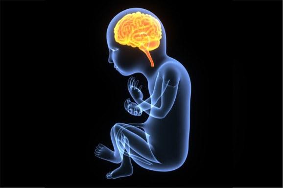 สมองได้รับการกระทบกระเทือน
